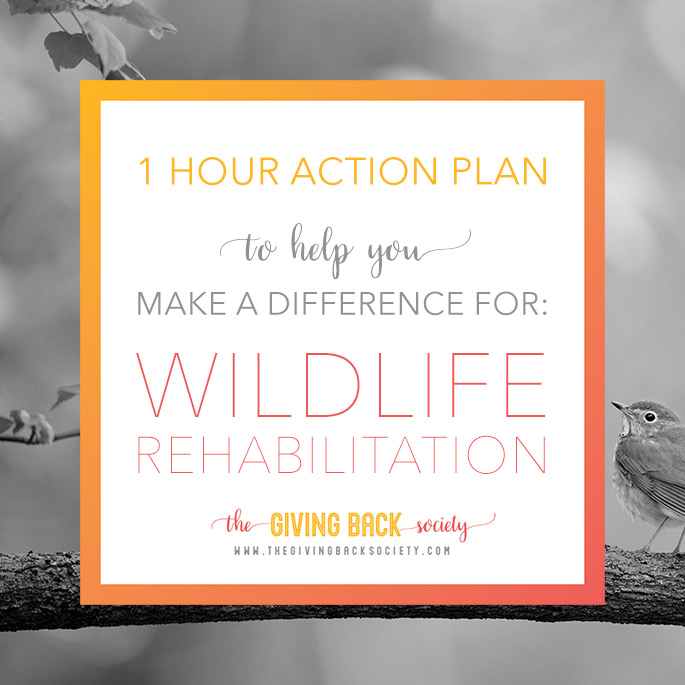 How you can help wildlife rehabilitation | The Giving Back Society