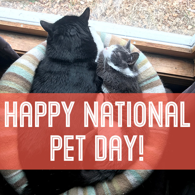 National Pet Day | Animal Rescue | Giving Back | The Giving Back Society
