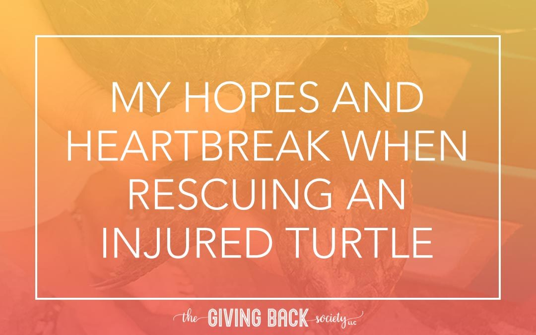 My Hopes and Heartbreak When Rescuing an Injured Turtle