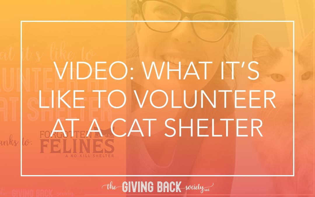 VIDEO: WHAT IT'S LIKE TO VOLUNTEER AT A CAT SHELTER