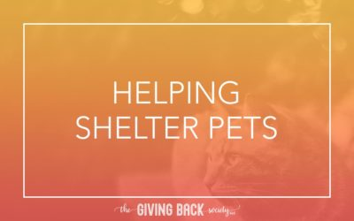 HELPING SHELTER PETS