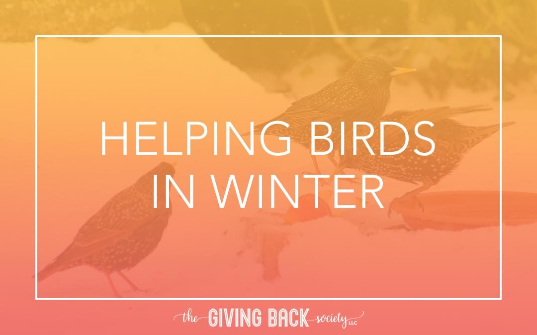 HELPING BIRDS IN WINTER