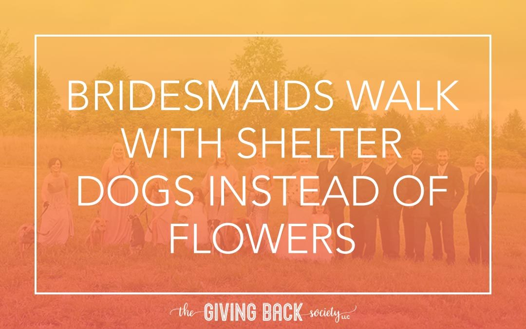 BRIDESMAIDS WALK WITH SHELTER DOGS INSTEAD OF FLOWERS