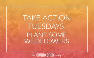 TAKE ACTION TUESDAYS: PLANT SOME WILDFLOWERS